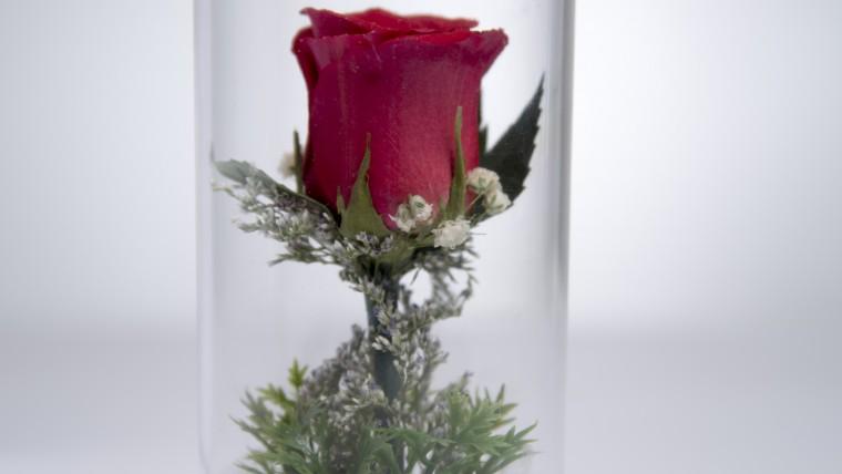 (సంక్రాంతి శుభాకాంక్షలు) Pongal Greetings to all Flower Lovers