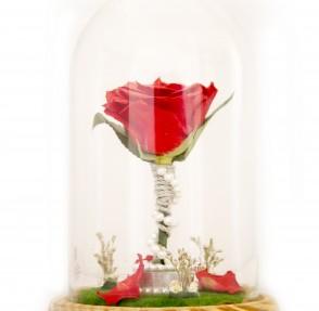 Season's Greetings to all Flower Lovers