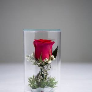 LF - Spirit-Rose