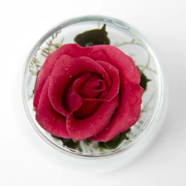 Cute - Red-Rose